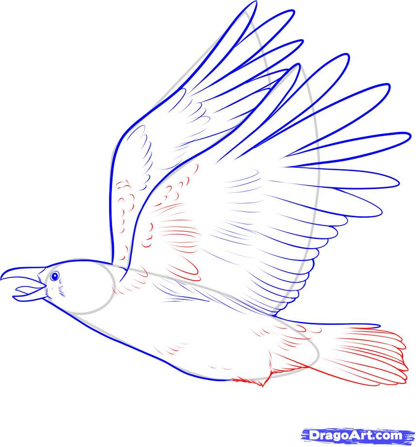 Drawn raven flight drawing Raven Flying Flying Outline photo#26