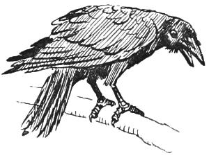 Drawn raven fox Crow The Crow Aesop Fox
