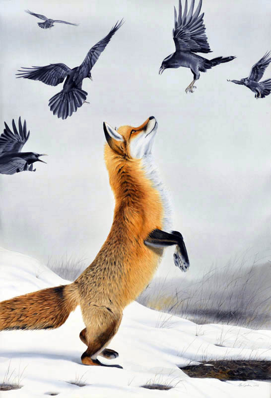 Drawn raven fox MacCombie Ravens original Fox with