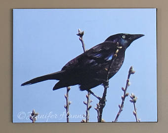 Drawn raven grackle Grackle Etsy Photography Canvas of