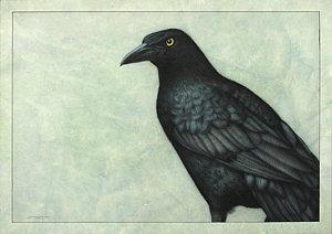 Drawn raven grackle W Raven Fine James Raven
