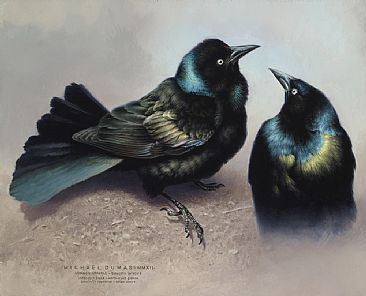 Drawn raven grackle Nature best images of Michael