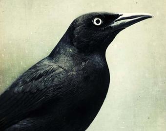 Drawn raven grackle Crow Art Photo Art Raven