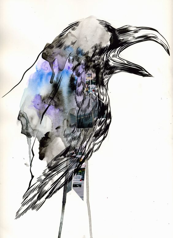Drawn raven graphic Ink photos watercolour ink drawn: