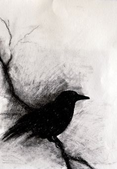 Drawn raven halloween Charcoal ORIGINAL on 5