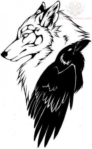 Drawn raven head Wolf really on and 13