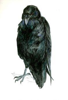 Drawn raven head