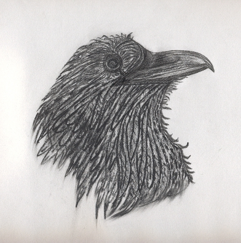 Drawn raven head This colored Canson a charcoal