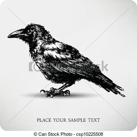 Drawn raven illustration Csp10225508 Raven high quality of