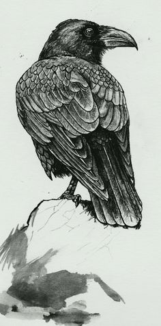 Drawn raven illustration 8x12 Consternation mini poster art