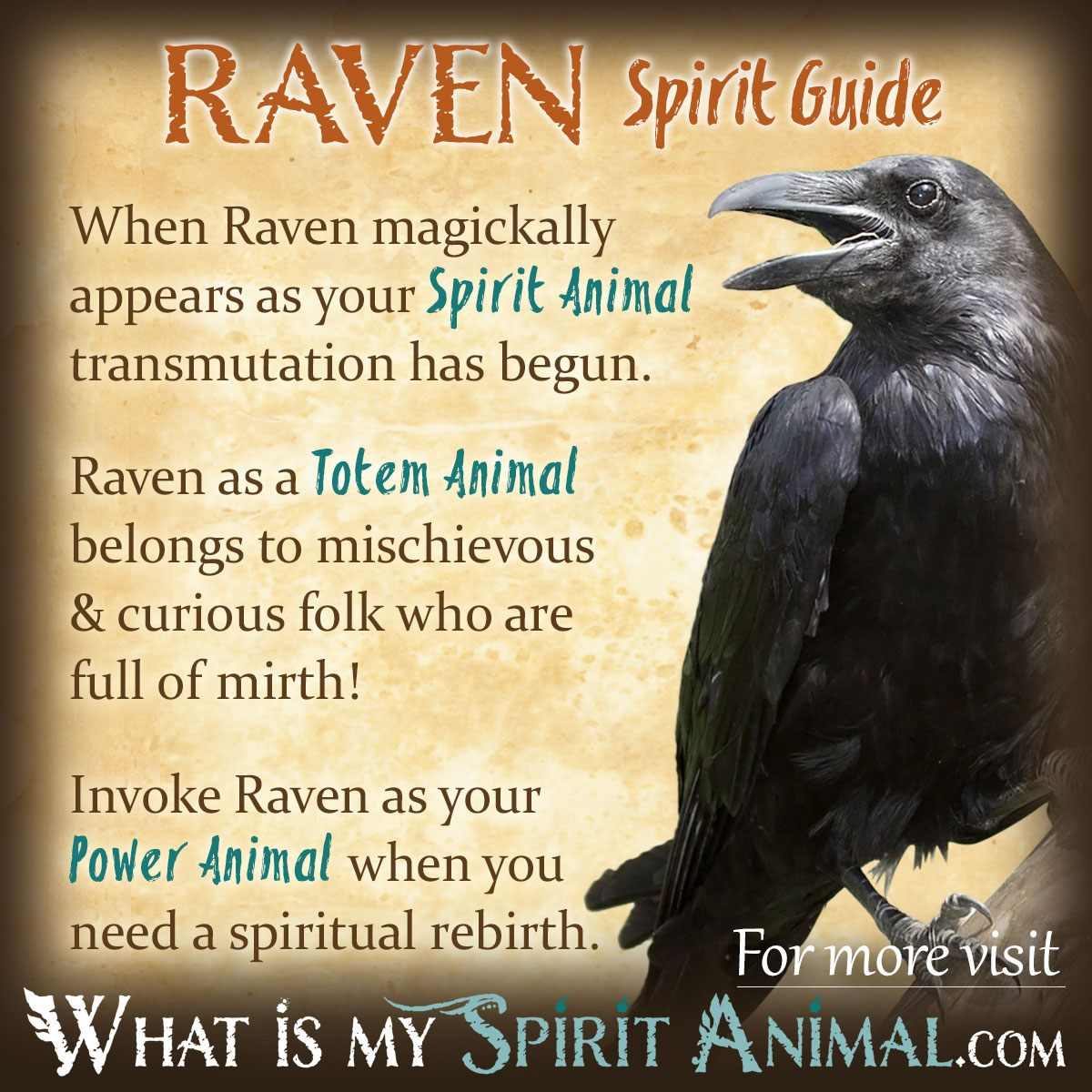 Drawn raven indian Totem Power Totem Spirit Meaning