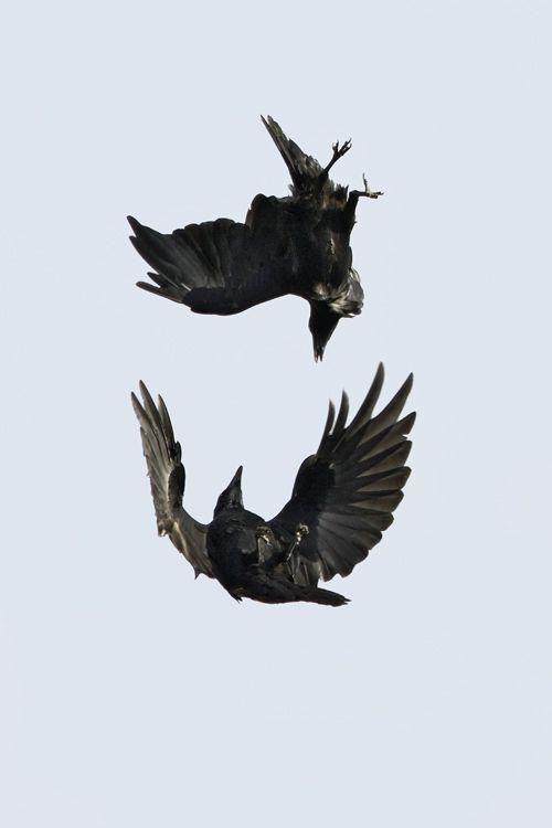 Drawn raven key Best Pinterest acrobatics Rich) Raven