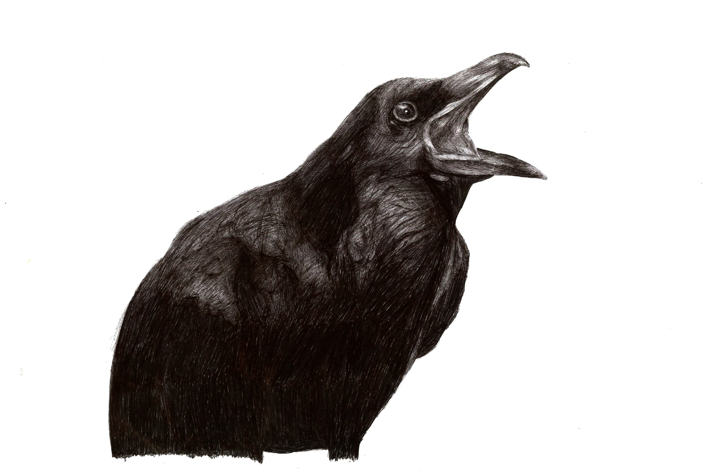 Drawn raven maleficent 'Maleficent' raven images in has