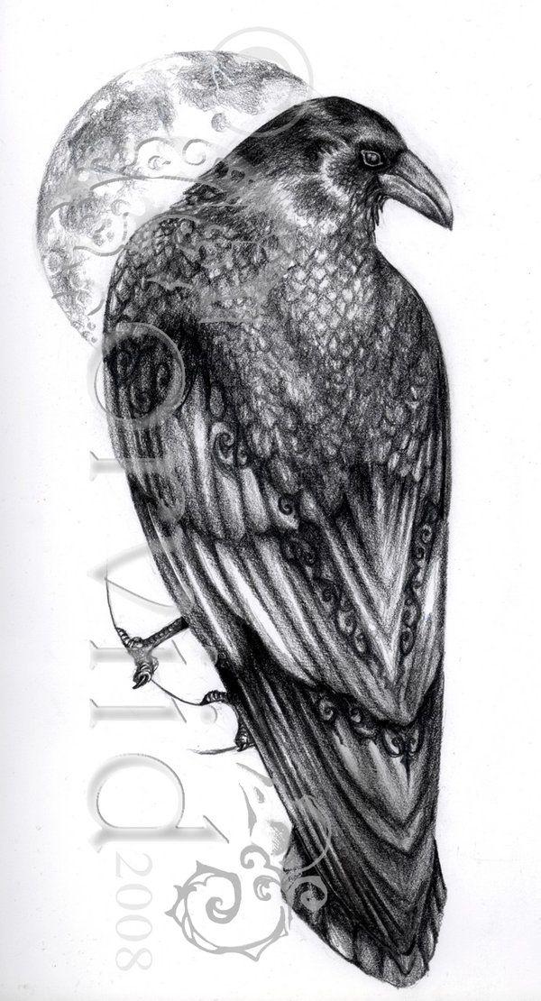 Drawn raven moon Com best Pinterest by Corviid
