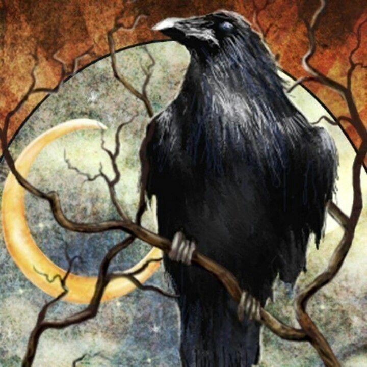 Drawn raven moon Pinterest about CROW/RAVEN on 880