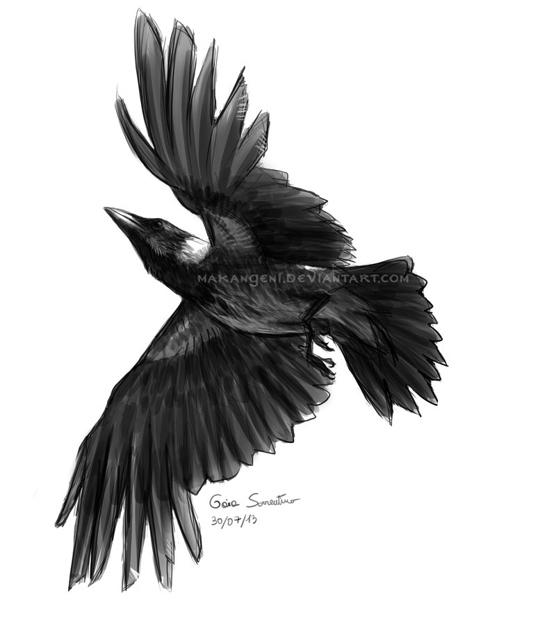 Drawn raven open wing  Tattoos magpie magpie wings