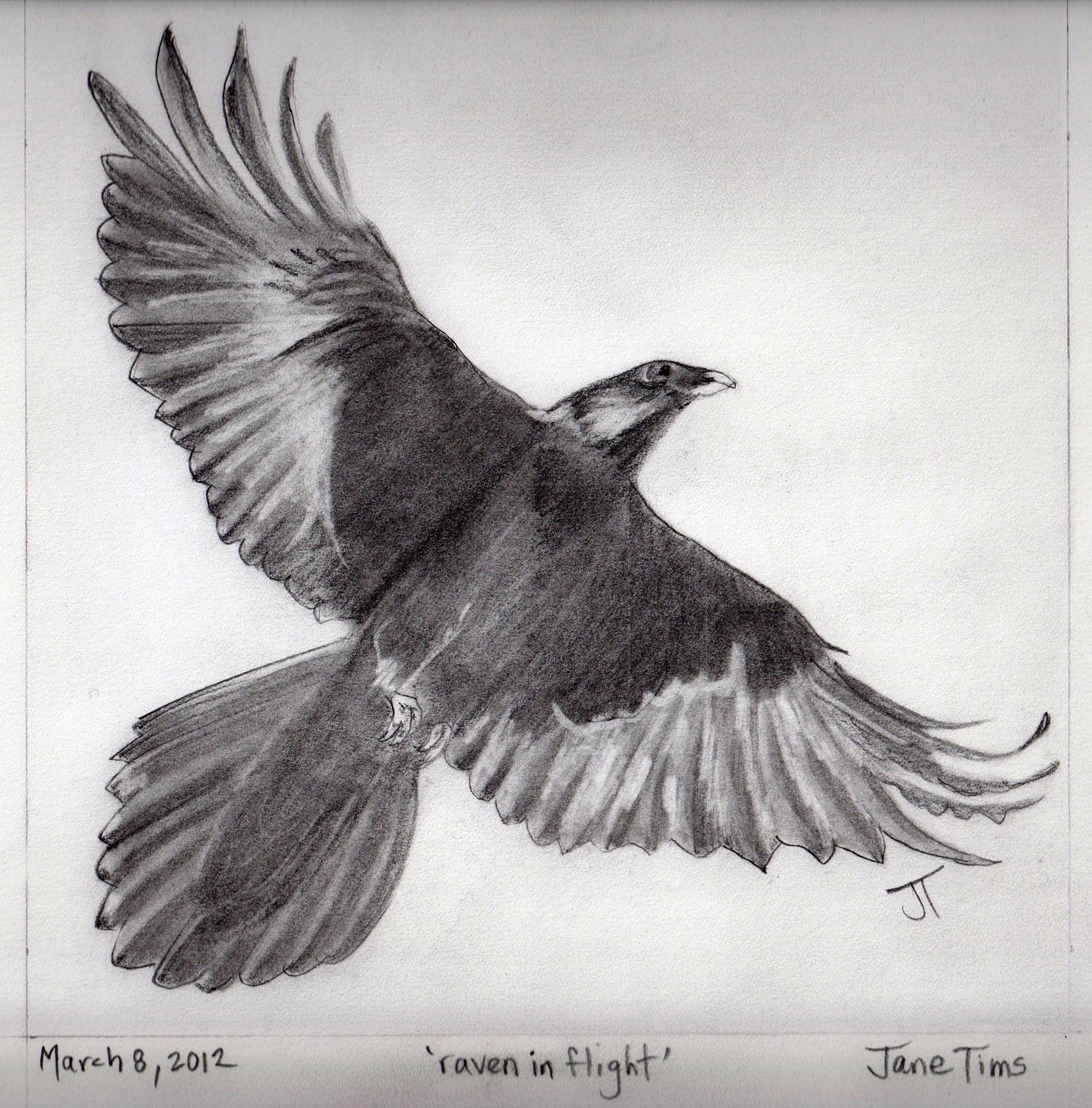 Drawn raven open wing Drawing Raven wings Wings Raven