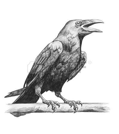 Drawn raven pencil drawing Drawing Pencil raven of Pencil