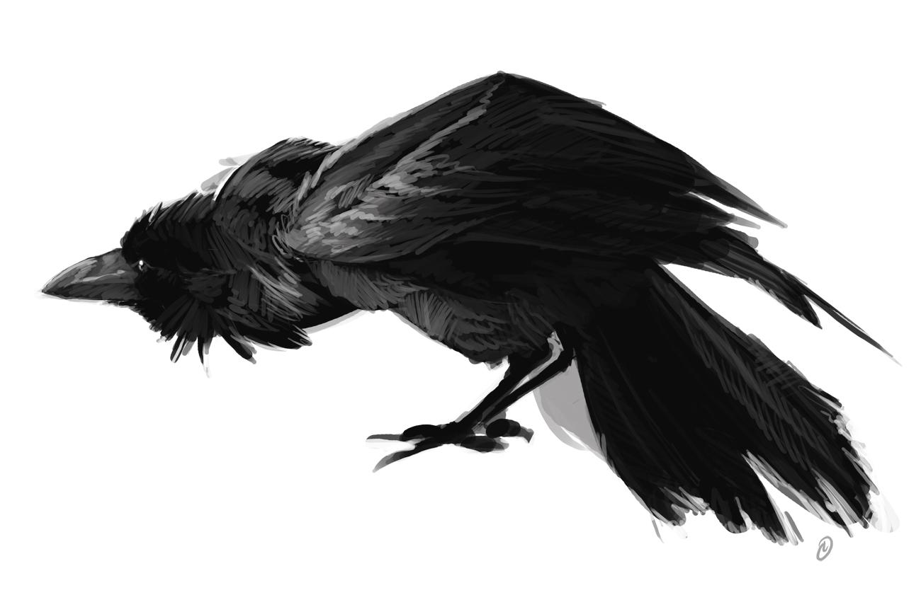 Drawn raven pencil drawing Jones : July wk1: Louie