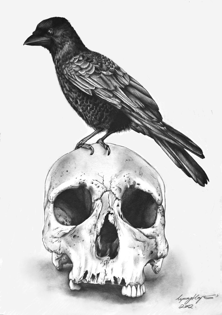 Drawn raven pencil drawing Html http://www bg/blank ArtPencil Pinterest