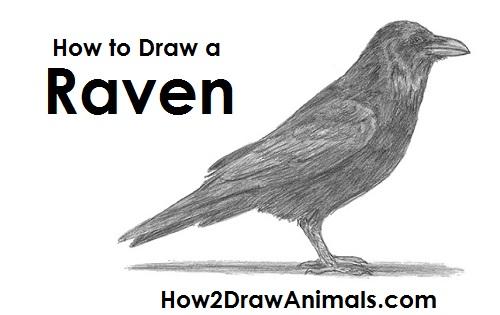 Drawn raven pencil drawing How Draw Bird a Draw