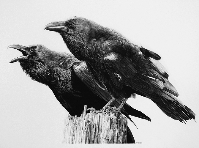 Drawn raven pencil drawing Memory Design 13 Architecture: and