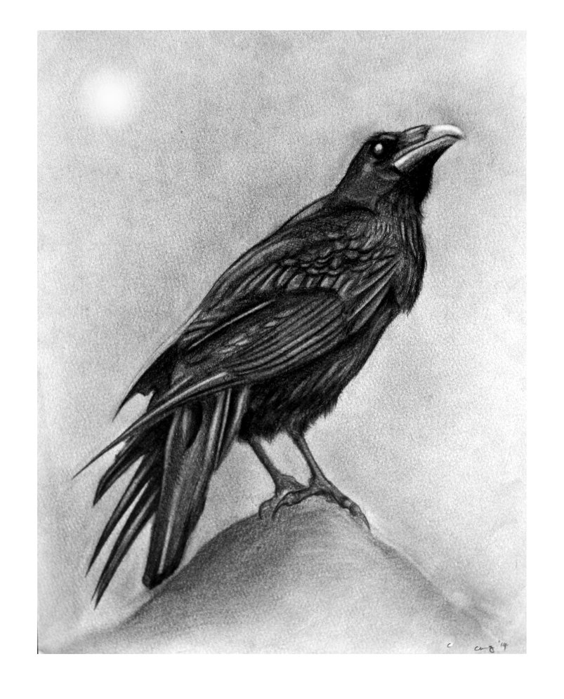 Drawn raven perched CarlosOscuroDC DeviantArt and by by