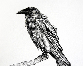 Drawn raven perched Dark  Art Gothic Drawing