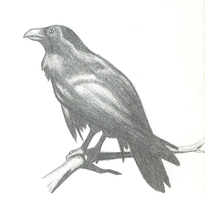 Drawn raven perched DeviantArt by Scuter Perched Raven