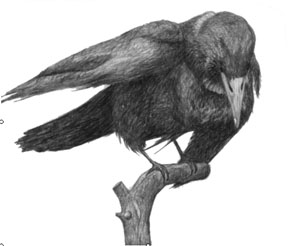 Drawn raven perched Interesting Document fonts did pretty