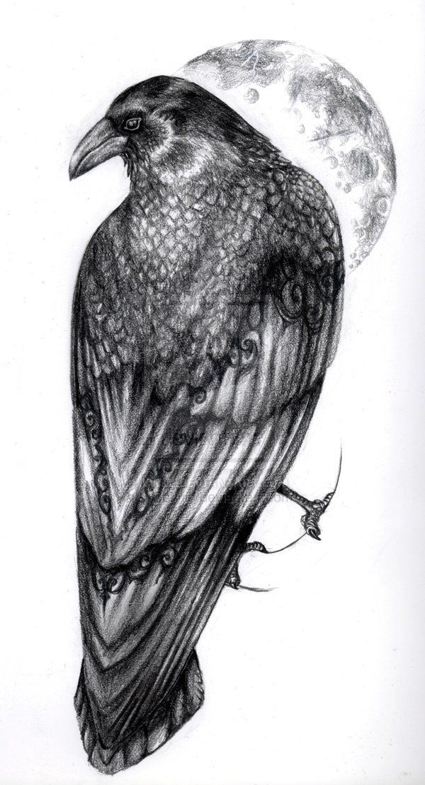 Drawn raven perched Images Tatuering tattoos best raven