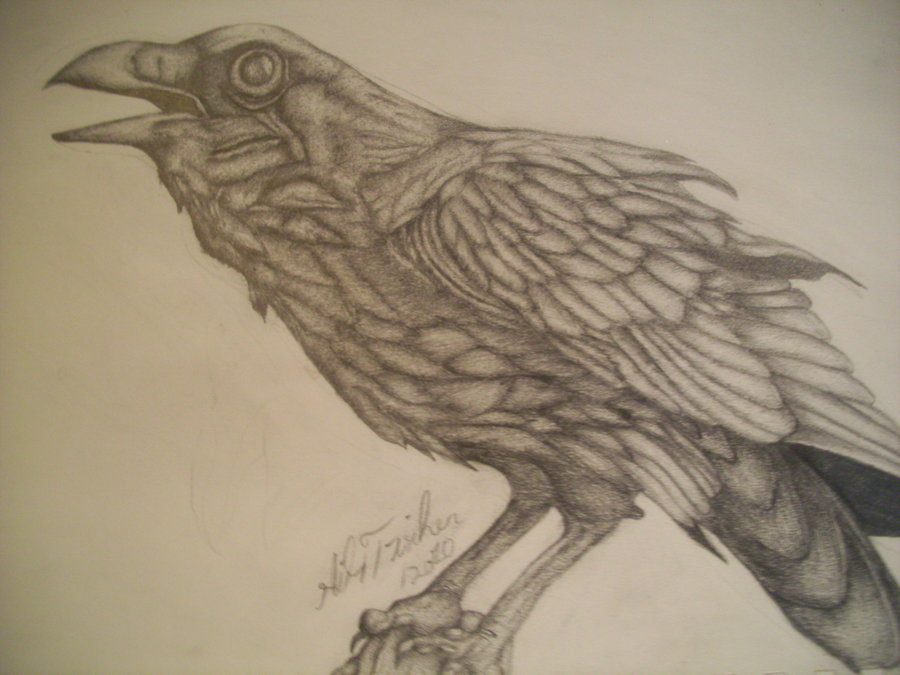 Drawn raven perched Billywhiz Perching  billywhiz Medicine
