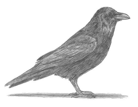 Drawn raven poem drawing Pinterest Sculpting Painting a a