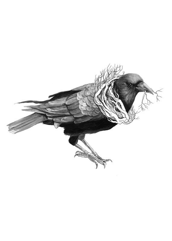 Drawn raven quality // 1752 the of Forest
