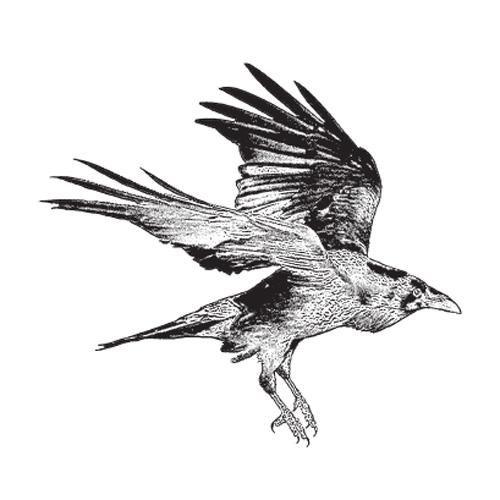 Drawn raven raven landing Raven drawing photo#2 Landing landing