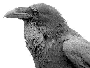 Drawn raven raven landing Raven Front View Landing View