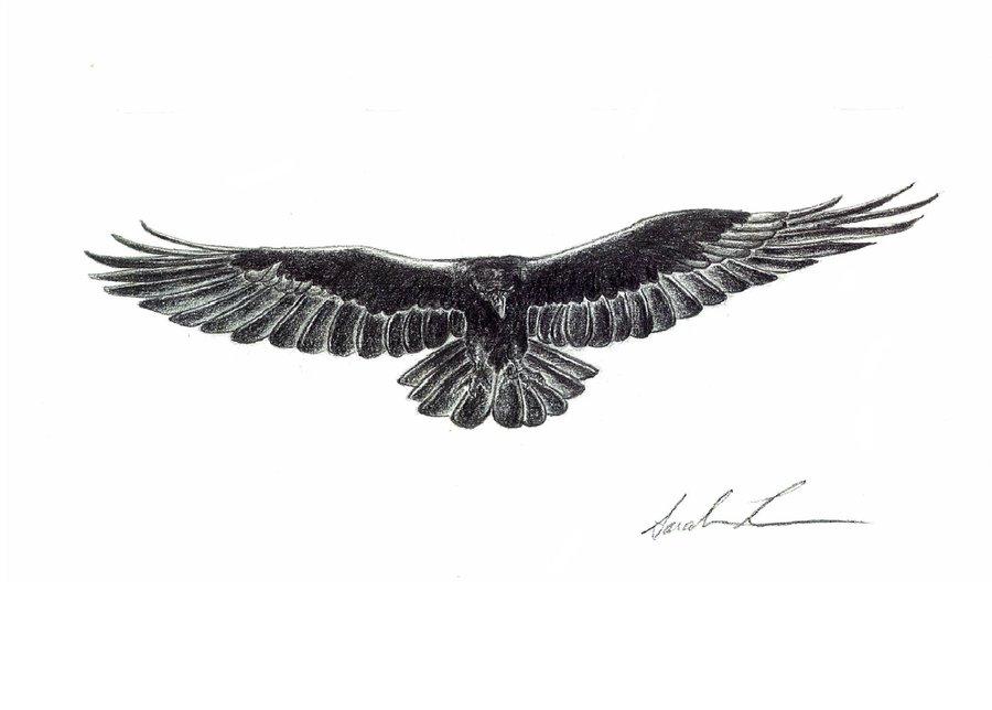 Drawn raven raven landing Photo of Raven Drawing Landing