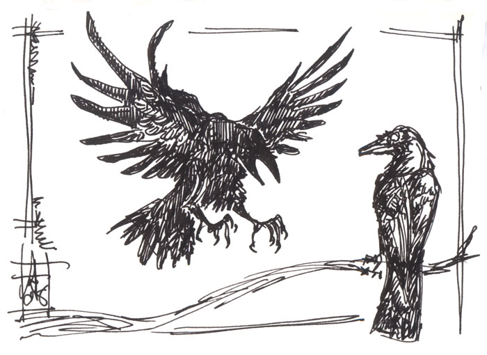 Drawn raven raven landing Raven drawing photo#8 Landing landing