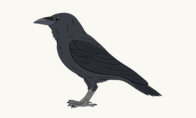Drawn raven rook A Easy Draw Image Guides