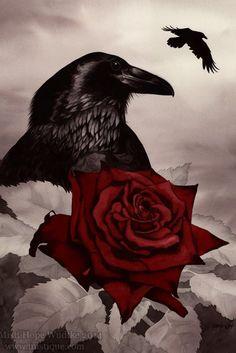 Drawn raven rose Skulls of …  Raven
