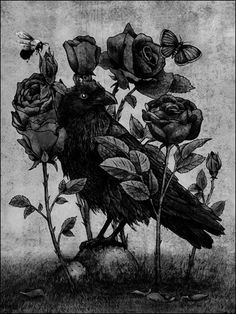 Drawn raven rose Bird cool would ideas love