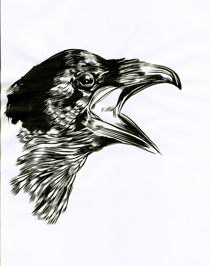 Drawn raven sketch Brush ink MC '…squawked Raven'