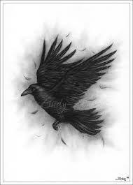 Drawn raven sketch Raven Google flying drawing Pinterest