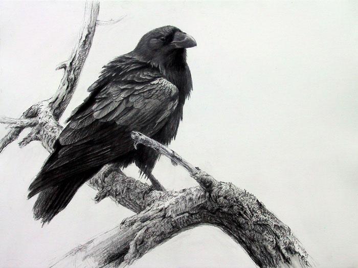 Drawn raven sketch Branch