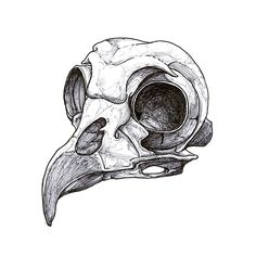 Drawn raven skull Com being deviantart and bear/deer