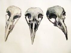 Drawn raven skull Raven tattoo Misc bear/deer become