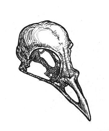 Drawn raven skull Ideas tattoo skull Best on
