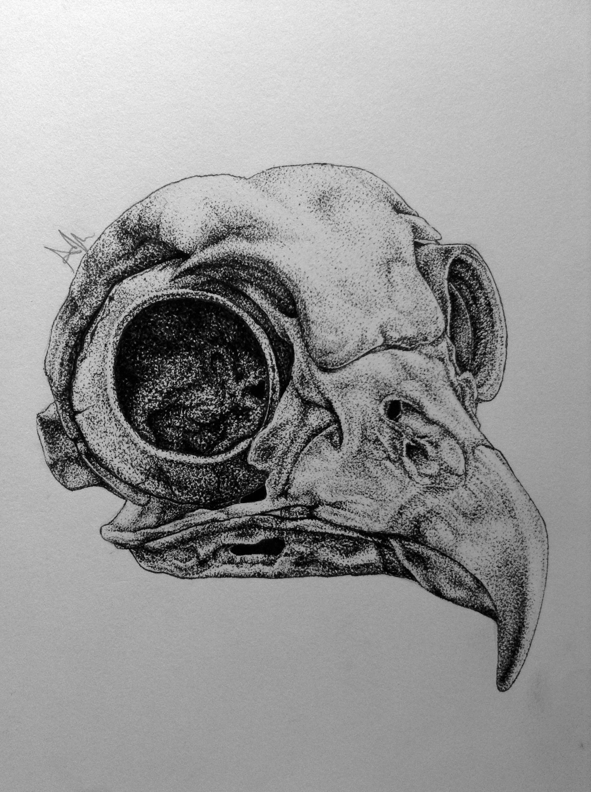 Drawn raven skull More and 5x10cm will an