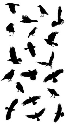 Drawn raven small Corvid Ravens silhouette and shifter