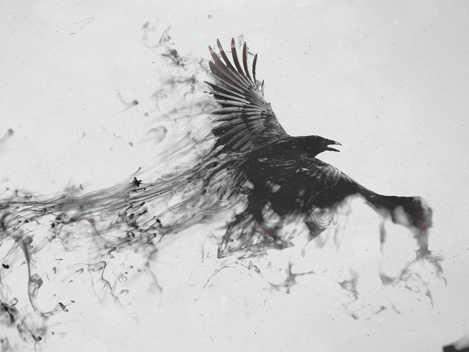 Drawn raven smoke 1600x1200 black Wallpaper smoke smoke